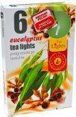 Čajová svíčka - eukalyptus