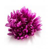 Chryzantéma - sv. fialová