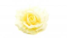 Růže - krémová
