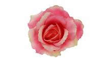 Růže - růžová