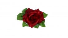 Růže - bordó
