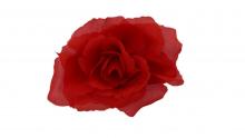 Růže - červená