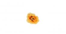 Růže mini -  tm. krémová