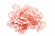 Hortenzie vazbová - růžová