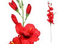 Gladiol sólo - červená