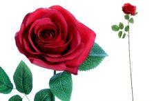 Růže sólo - červená