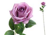 Růže sólo - fialová
