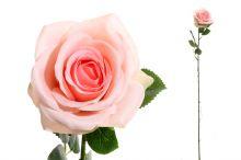 Růže sólo - růžová