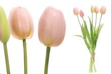 Tulipány x5 - růžová