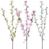 Jabloň květ x3 - MIX