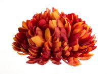 Chryzantéma - hnědá