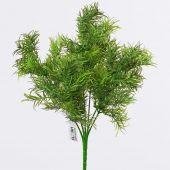 Zeleň trs x7 - asparagus