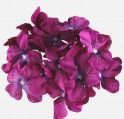 Hortenzie - fialová