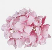 Hortenzie - růžová