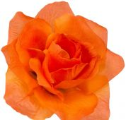 Růže - oranžová