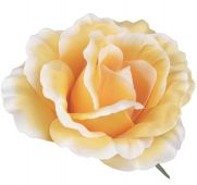 Růže - sv. oranžová