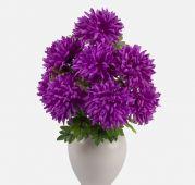 Chryzantéma x9 -  fialová