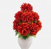 Chryzantéma x9 -  tmavě oranžová